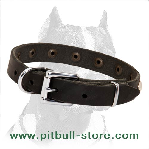 Leather Pitbull collar rust proof equipment