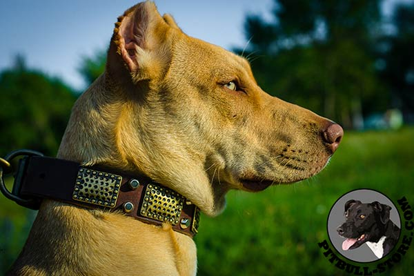 Pitbull dog collar made of soft genuine leather