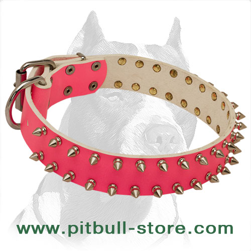 Leather dog collar for glamorous female Pitbulls with hand-riveted nickel spikes