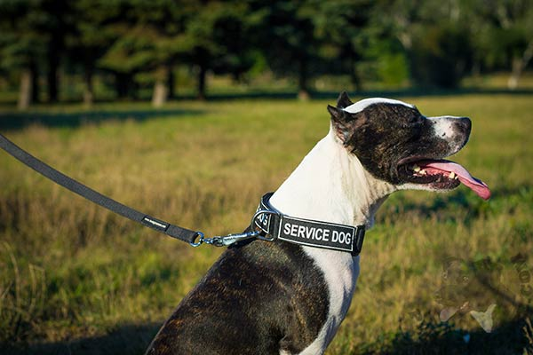 Pitbull nylon collar of classic design with quick release buckle for quality control