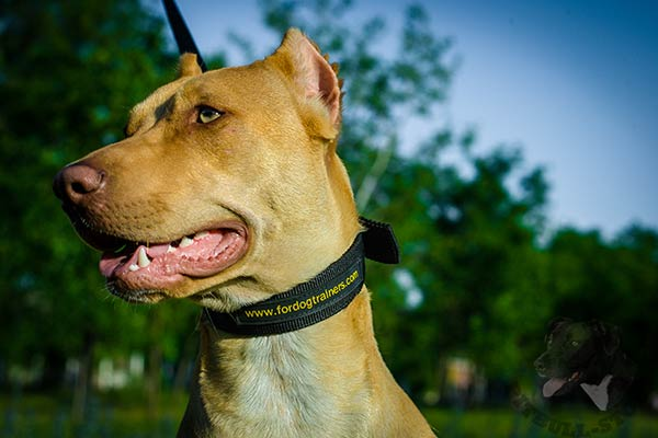 Pitbull nylon collar with strong nickel plated fittings for quality control