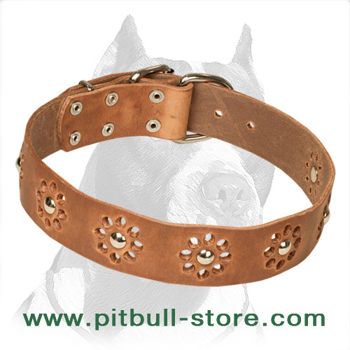 Pitbull collar of genuine leather