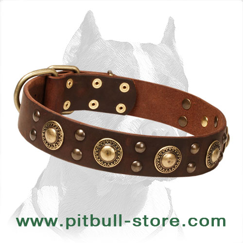 Dog collar with smooth surface and beveled edges