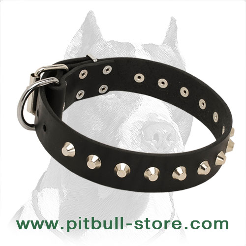 Dog collar for Pitbulls, sophisticated design