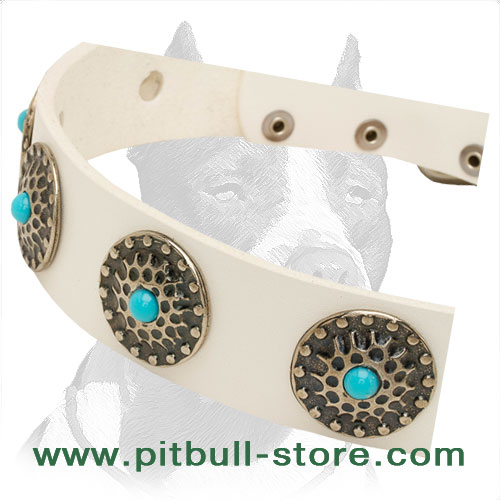 Dog collar for your big, powerful Pitbull