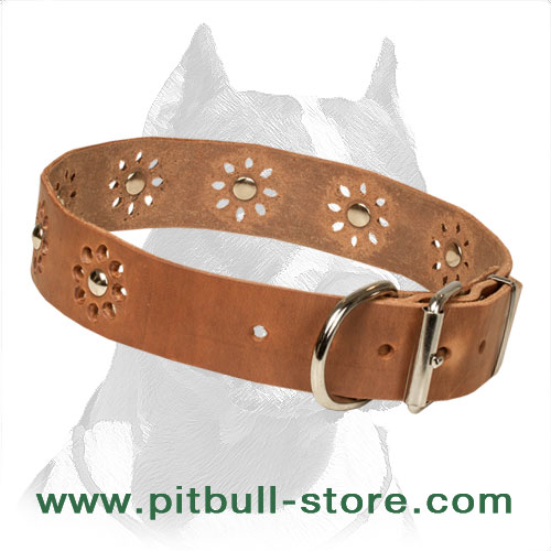 Pitbull leather collar with riveted adornment