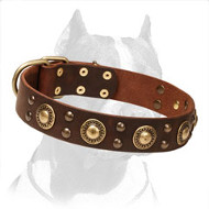 'Golden Knights' Pitbull Dog Collar