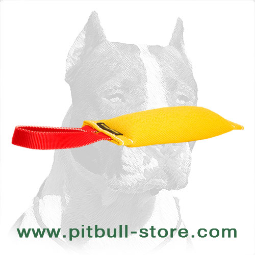 Young Pitbulls bite training tug equipped with handle