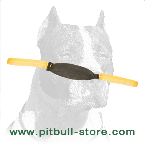 Pitbull training dog bite tug