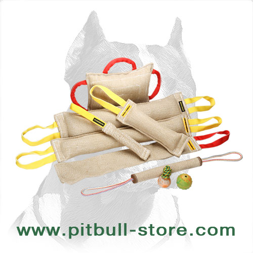 Pitbull training set with 3 gifts
