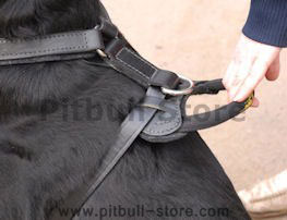 handle for harness