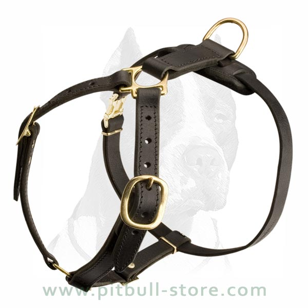 Leather Harness with Solid Fittings