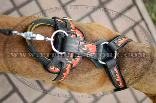 Safe Harness for Pitbull Champion