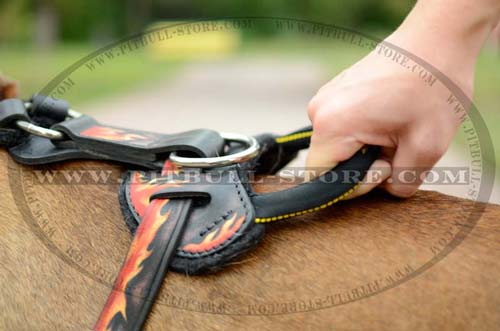 Dog Harness with D-ring for attaching a leash