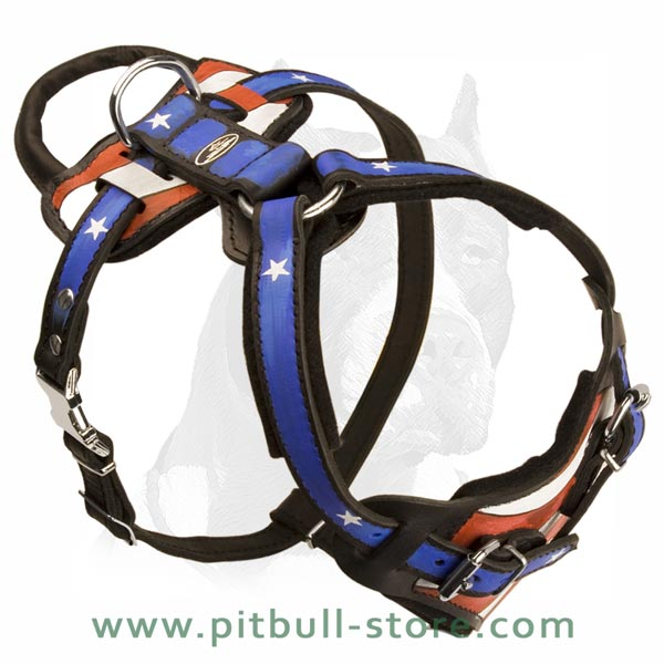 Leather Harness with padded chest and back plates