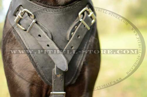 Beautiful Leather Harness for training