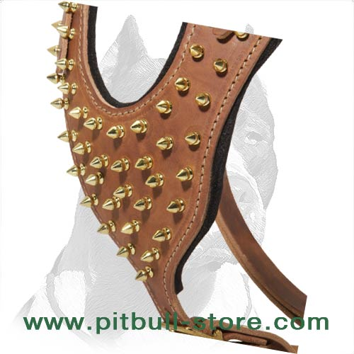 Harness made of highest quality Leather