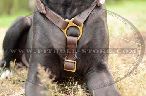 Harness of High quality leather