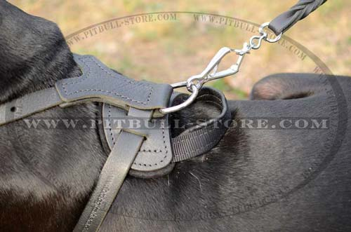 Harness with Welded D-ring