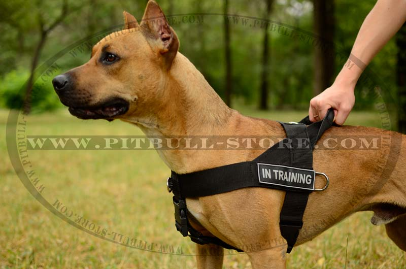 Service Dog Harness Small Breed