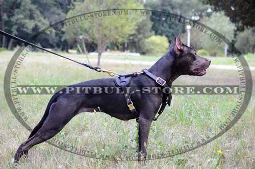 Quality Harness for various kinds of training
