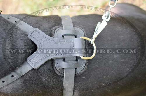 Shiny rustproof buckles and spikes