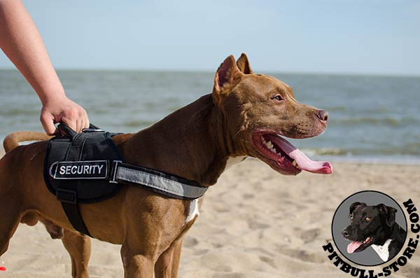 Durable nylon harness for Pitbull comfortable walking