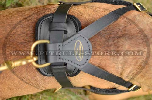 Leather Harness with Several ways of adjustment