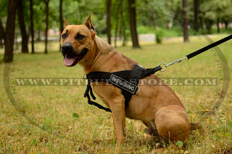Dog Harness For Pitbull Puppy