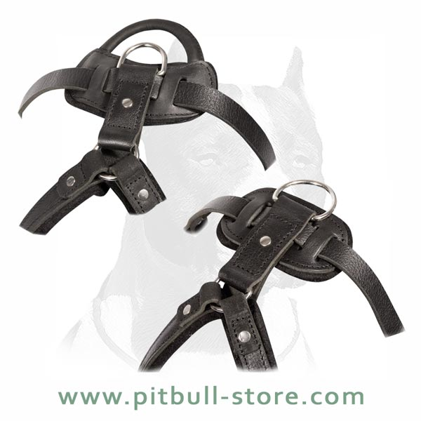 Long life Pitbull Dog Harness