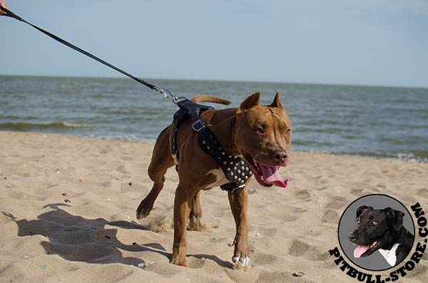 Natural leather Pitbull harness with