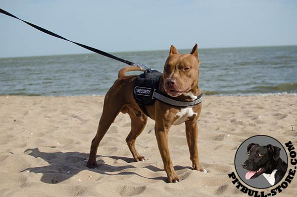 Water and dust resistant Pitbull harness