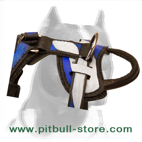 Wide leather straps of Holy Land style dog harness