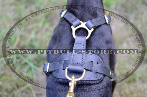 Extraordinary Harness with Strong Fittings
