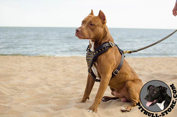 Pitbull dog harness made of the highest quality materials