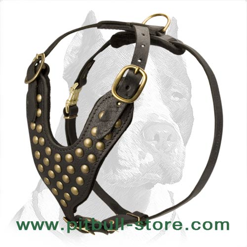 Padded Chest Plate with Brass Studs