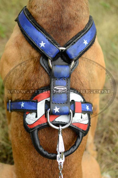 Pitbull leather harness with D-ring