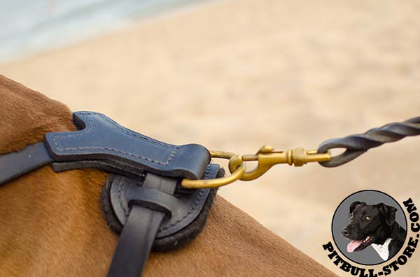 Genuine leather Pitbull harness with brass D-ring