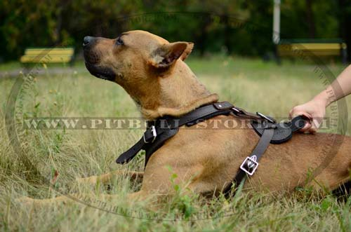 Comfy Handle on Leather Pitbull Harness