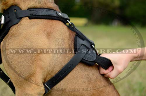 Pitbull Leather Harness with Comfy Handle