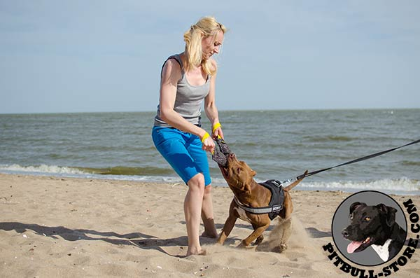 Comfortable nylon Pitbull harness for any activity