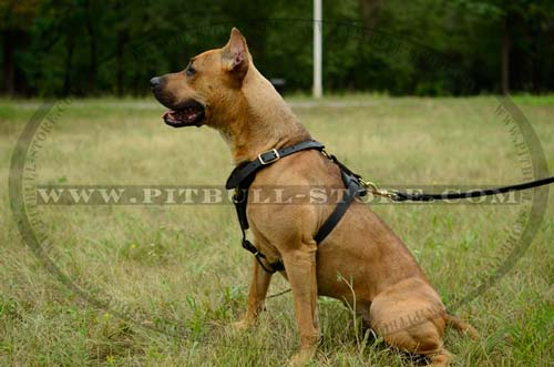 Leather Harness with Adjustable Straps for Pitbull