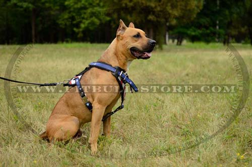 Pitbull Hand-painted leather harness