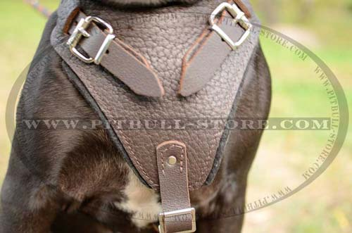 Felt Padded Leather Pitbull Harness