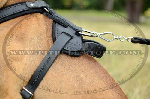 Nickle D-ring on Pitbull Leather Harness