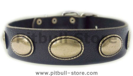 Designer Dog Collar - Exclusive Leather  Collar for Pitbull   C103