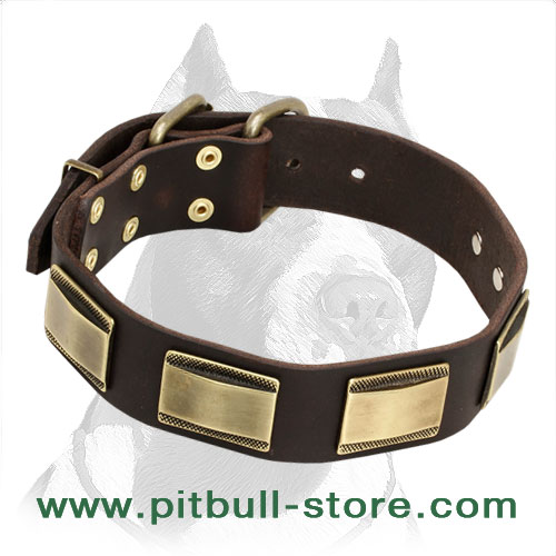 Posh Leather Pitbull Dog Collar with Decorative Brass Plates