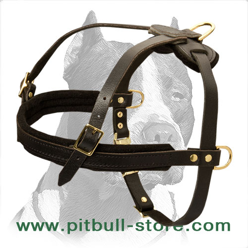 Elegant Leather Pitbull Dog Harness with extra rings for cart attaching