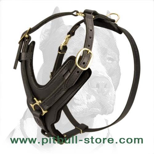 Pitbull Dog Handcrafted Leather Dog Harness with Brass Decorations