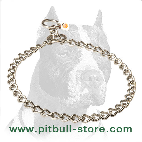 Swagger Pitbull Dog Choke Collar